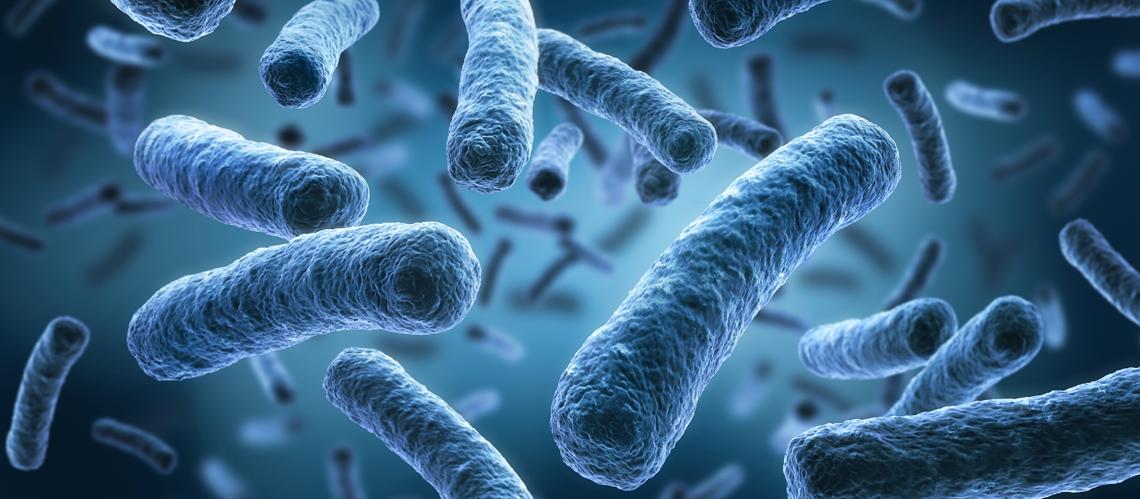 Microbiota y probióticos