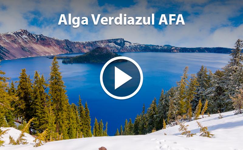 ¿Conoces las Algas Verdiazules AFA?