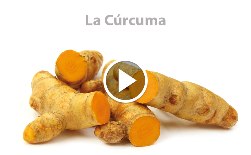 ¿Conoces la Cúrcuma?