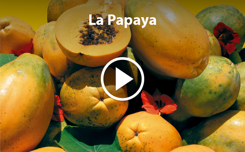 ¿Conoces la Papaya?
