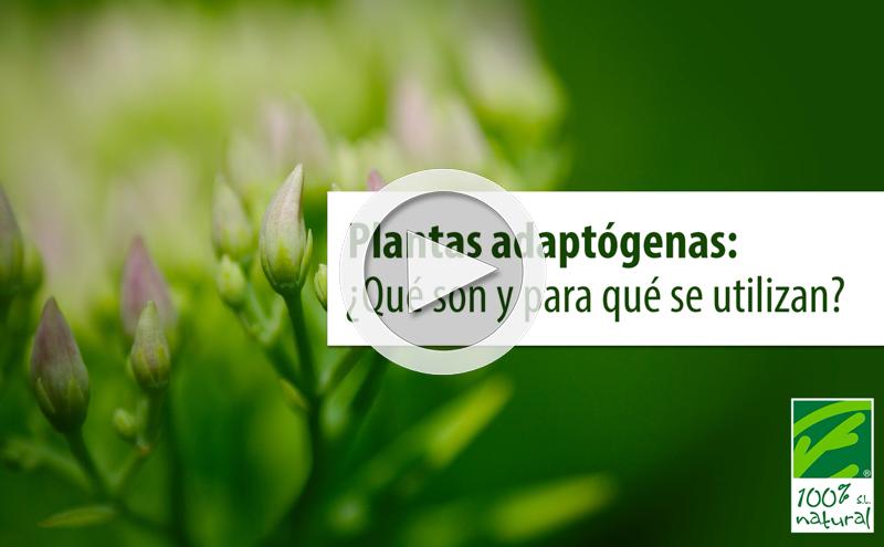Plantas adaptogenas: ¿Qué son y para qué se utilizan?