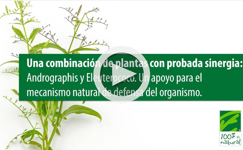 Una combinación de plantas adaptógenas con probada sinergia: Andrographis y Eleuterococo.
