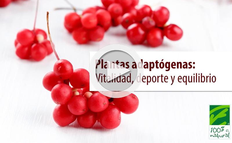 Plantas adaptógenas: Vitalidad, deporte y equilibrio